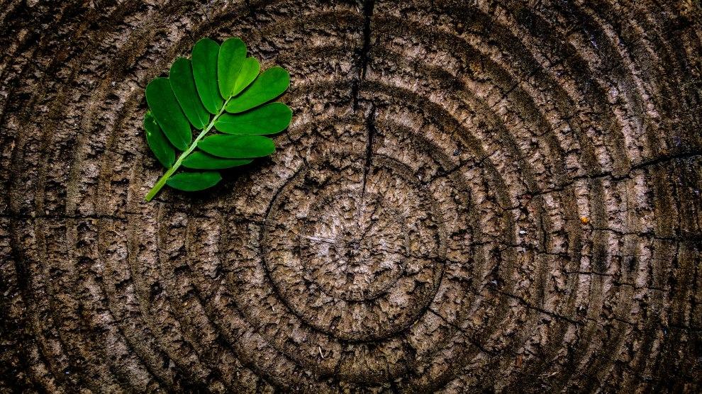 Bad, Good; It's Hard to Tell--A Zen Story About Mindfulness | Libero Magazine 2
