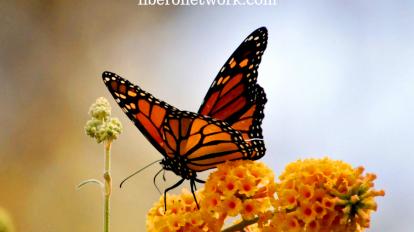 The Metamorphosis of Recovery | Libero Magazine