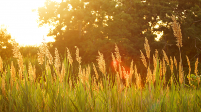 Surviving Summer Transitions | Libero Magazine 1