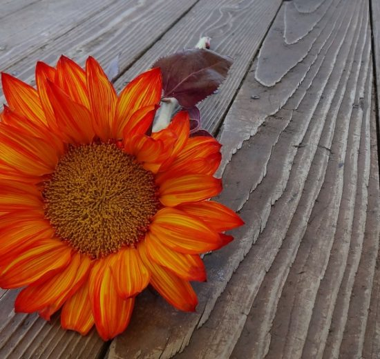Thanksgiving and Eating Disorder Recovery (you've got this!) | Libero Magazine 2