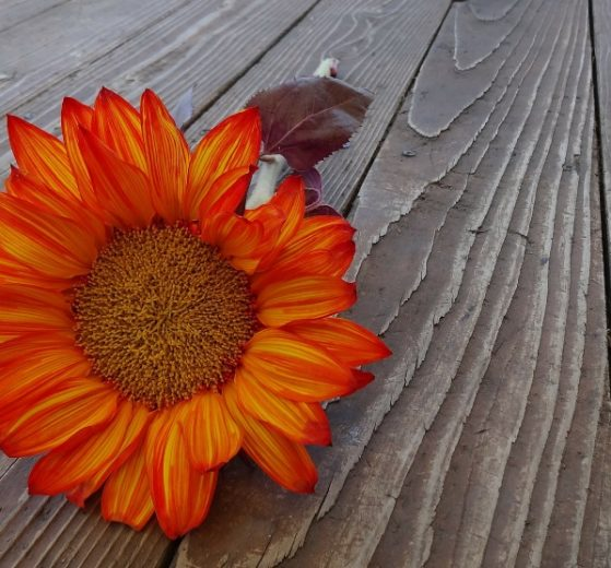 Thanksgiving and Eating Disorder Recovery (you've got this!) | Libero Magazine