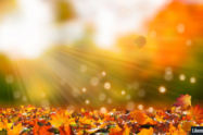Fall Transitions: Tips for Eating Disorder Recovery